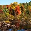Autumn Beaver Pond Reflections by Georgia Mizuleva