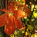 Autumn Begins 2 by Steve Harrington