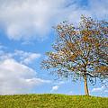 Autumn Begins by Ian Middleton