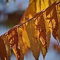 Autumn Blaze by Bob Avritt