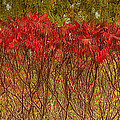 Autumn Blaze by Claudio Bacinello