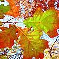 Autumn Bliss by Robert ONeil