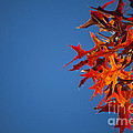 Autumn Blue by Wayne Moran