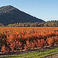 Autumn Blueberry Panorama by Mick Anderson