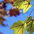 Autumn Bokeh  by Chris Anderson