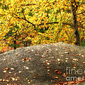 Autumn Boulder And Leaves by Mike Nellums