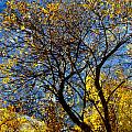 Autumn Branches Tall And Abstract Painting by Anita Burgermeister