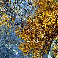 Autumn Branches Wide And Abstract Painting by Anita Burgermeister