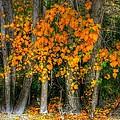 Autumn Breakout No.2 by Jenny Setchell