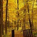 Autumn Bridge IIi by Valerie Fuqua