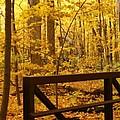 Autumn Bridge Iv by Valerie Fuqua