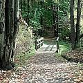 Autumn Bridge by Jenny DiNuoscio
