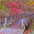 Autumn Bridge by Kay Novy