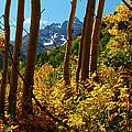 Autumn Brilliance 2 by Jeremy Rhoades