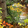 Autumn By A Pennsylvania Mountain Stream Digital Art by A Gurmankin