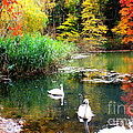 Autumn By The Swan Lake by Dora Sofia Caputo Photographic Design and Fine Art
