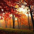 Autumn Canopy by Terri Gostola