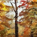 Autumn Canvas by Dan Sproul