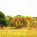 Autumn Canvas by Bonfire Photography