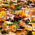 Autumn Carpet by Alexander Senin
