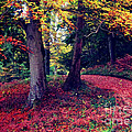 Autumn Carpet In The Enchanted Wood by Callan Art