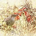 Autumn Catbird by Susan Capuano