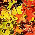 Autumn Celebration by Christian Mattison