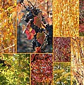 Autumn Collage by Carol Groenen