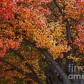 Autumn Color by Bob Christopher