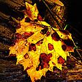 Autumn Color In June by Jeff Kurtz