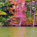 Autumn Color In Norfolk Botanical Garden 1 by Jeelan Clark