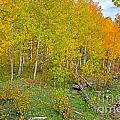 Autumn Color by Baywest Imaging