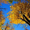 Autumn Color by Mark Prescott Crannell