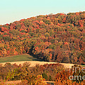 Autumn Color On Rolling Hills by Adam Long