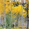 Autumn Colorado-1 by Dennis  Rundlett