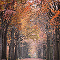Autumn - Colorful Red Green Orange Nature Landscape Fine Art Photography by Artecco Fine Art Photography