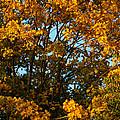 Autumn Colors 11 by Rudi Prott