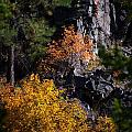 Autumn Colors 2 by Newel Hunter