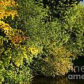 Autumn Colors 3 by Rudi Prott