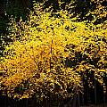 Autumn Colors 4 by Newel Hunter