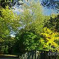Autumn Colors 4 by Rudi Prott