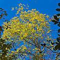 Autumn Colors Against The Sky by John M Bailey