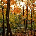 Autumn Colors by Charles Owens