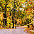 Autumn Colors - Colorful Fall Leaves Wisconsin - II by David Perry Lawrence