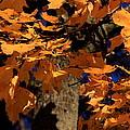 Autumn Colors by David Dufresne