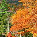 Autumn Colors by Denyse Duhaime