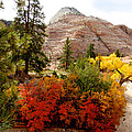 Autumn Colors In Zion's Highlands-ut by Ruth Hager