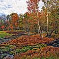 Autumn Colors by Marcia Colelli