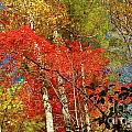 Autumn Colors by Patrick Shupert