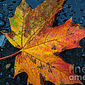 Autumn Colors by Tikvah's Hope